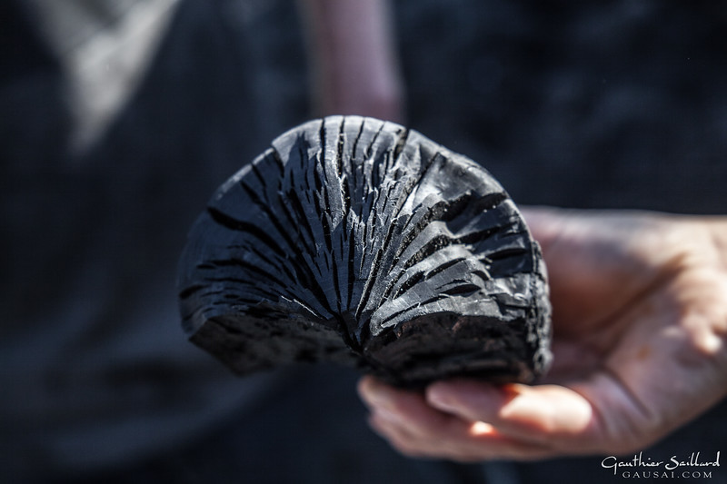 People discovered the power of coal 6000 years ago. Its high temperatures make possible to extract copper to produce swords or coins: Human History is in that regard based on the ability to produce coal. Nowadays, the industry needs it to produce filters, but the biggest part lands in our grill.