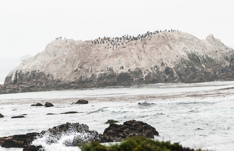 Lots of birds at pebble beach