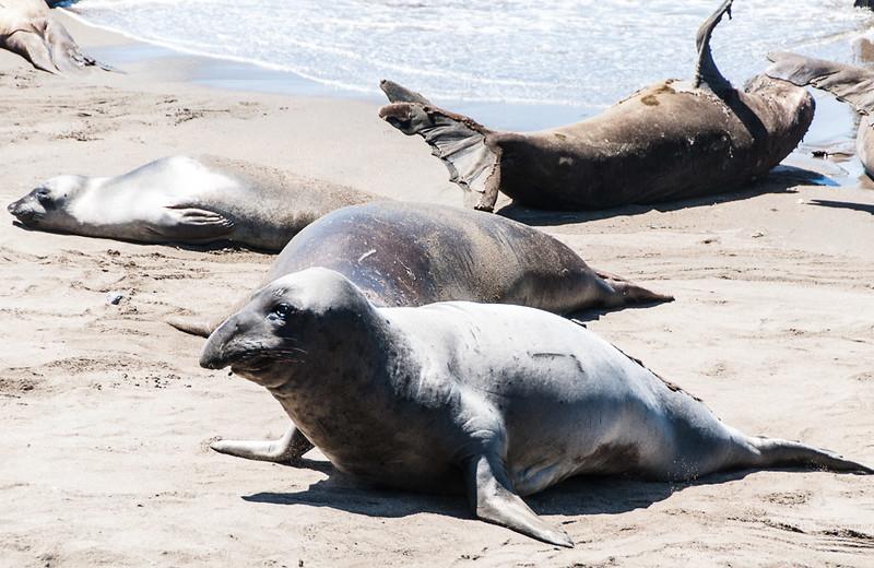 Elephant seal preserve