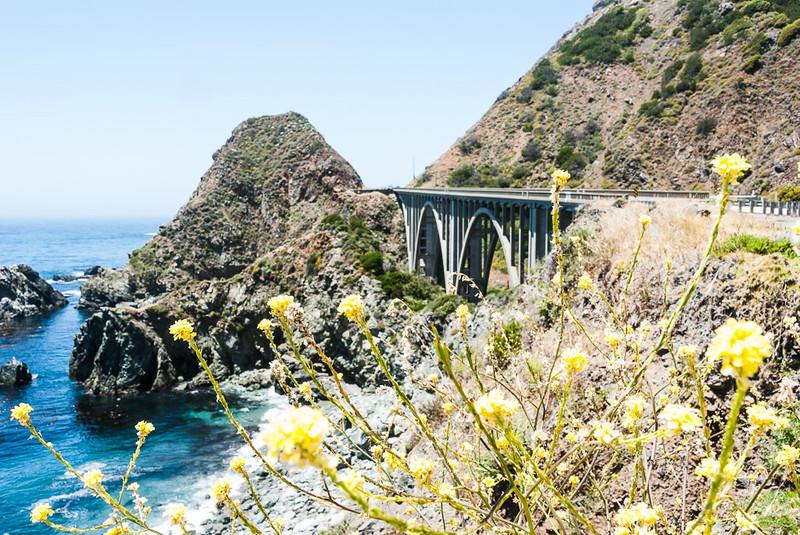 Wild flowers and Rocky Creek Bridge 1932