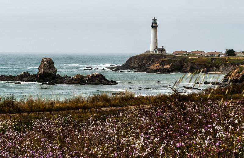 Wildflowers and lighthouse at Pigeon Point