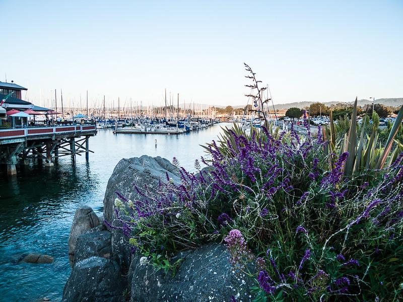 Harbor wildflowers