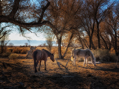 Kemmerer___Pastoral Scene in Owens Valley