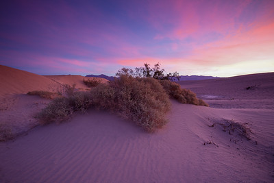 Bush In Sand Dunes During Sunrise