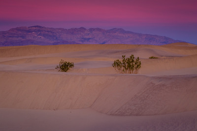 Two Bushes At Dawn, Mesquite Flats