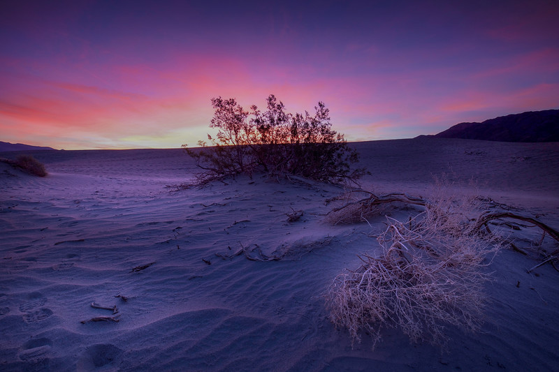 Sunrise On The Dunes, Mesquite Flats