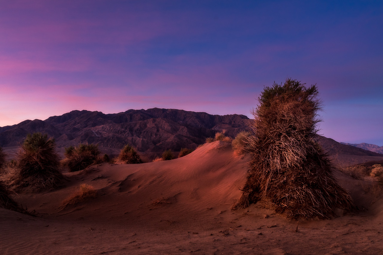 The Devil's Cornfield, Death Valley National Park, CA