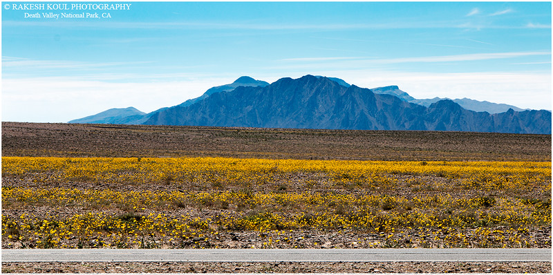 "The ""El Niño"" effect in Death Valley"