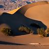 Mesquite Dunes and Shrubs