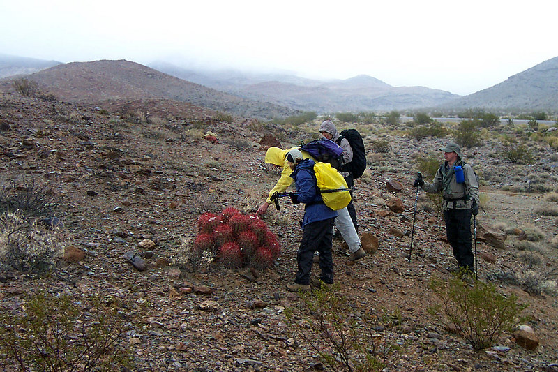 Checking out a cactus near the start of the hike.