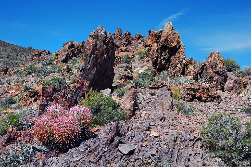 Rocks and cactus.