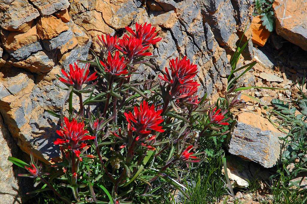 Only saw two bunchs of indian paintbrush on the hike.