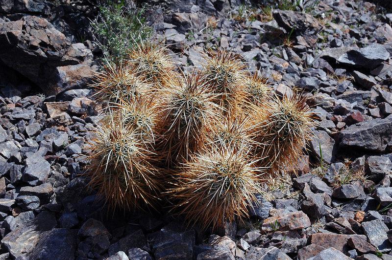 Cactus on the ridge.