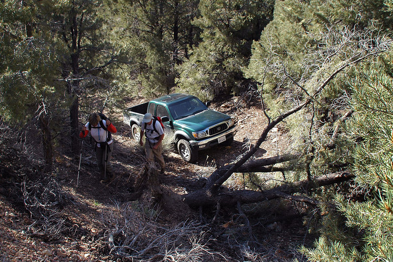 We could only drive to this point. This fallen pinyon pine was blocking the road.