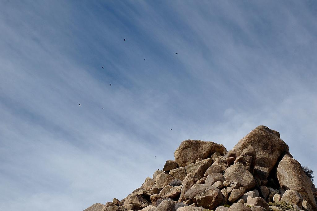 Ravens flying overhead.