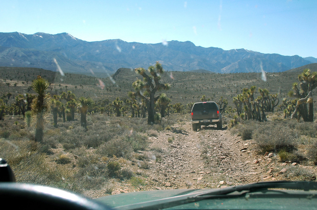 """We decided to visit the joshua tree made famous by U2 when they used  it on the cover of their """"The Joshua Tree"""" album, it's on the way home."""