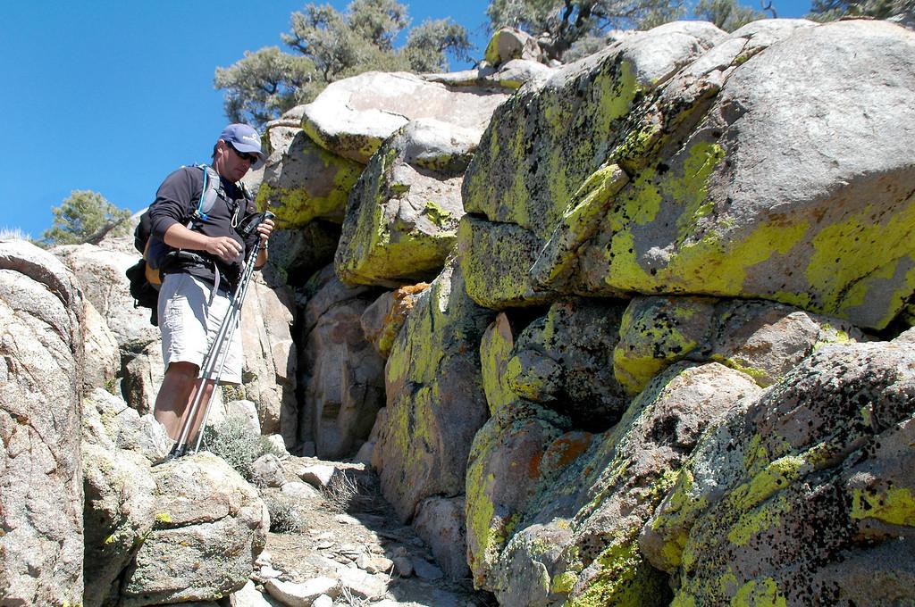 Lichens on the rocks.