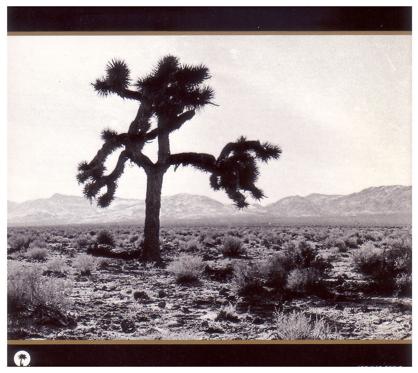 Photo of the tree from the CD cover.
