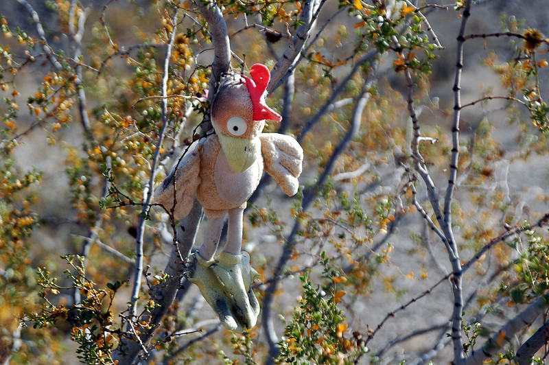 The flying chicken was still hanging in the bush. Looks like he made it though the summer okay.