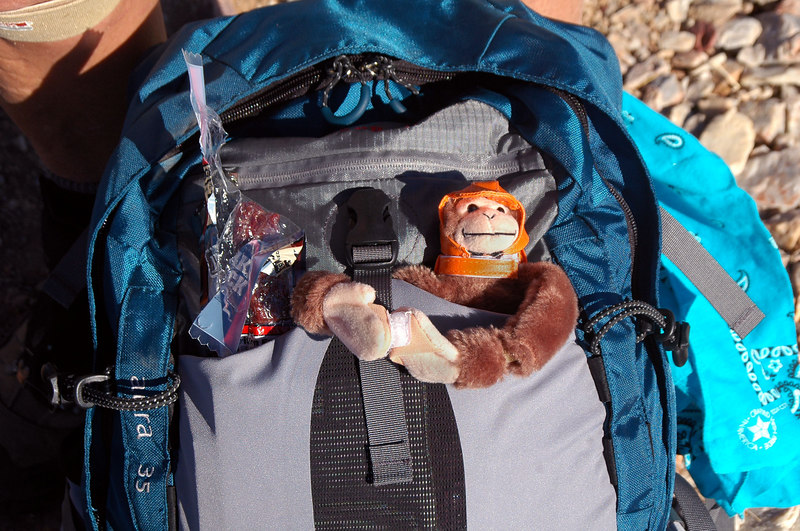 Sooz's monkey is back in the pack and ready for the hike down.