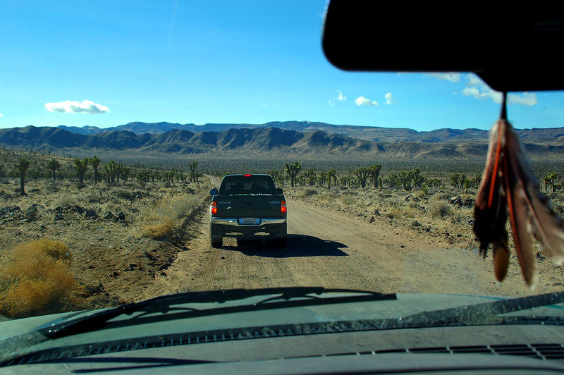 There were a lot of joshua trees at Lee Flat.