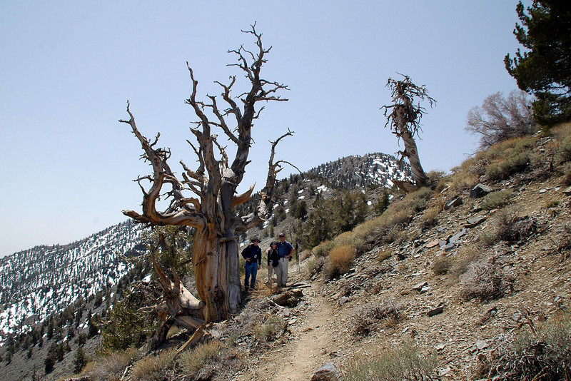 This tree is dead, but it's my favorite one on this hike.