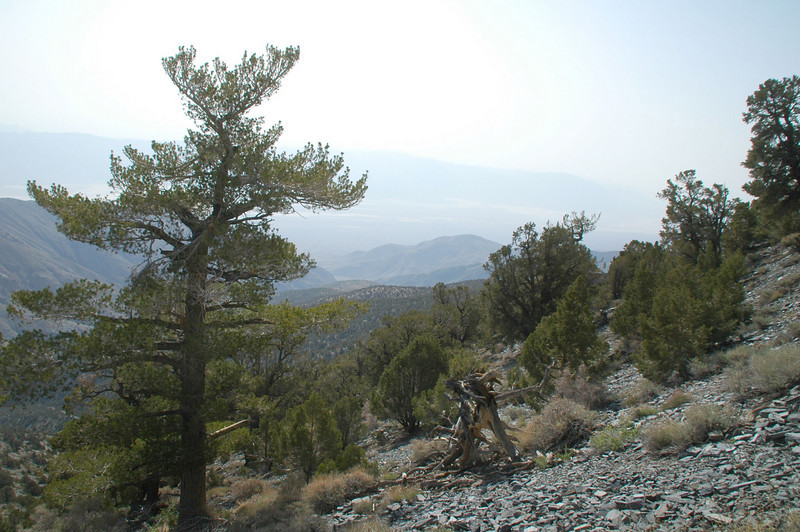 Looking to the southeast into Death Valley. Really hazy today.