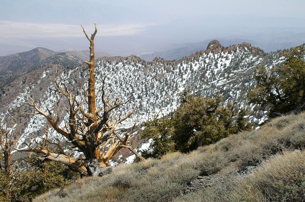 Another nice looking dead tree. We are over 10,000 feet here.
