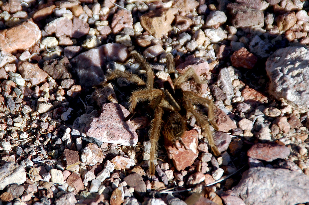 On the drive back to the cabin, we found a tarantula. We stopped to check it out and get a few photos.