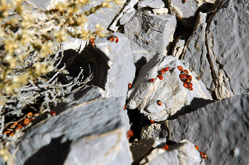 Ladybugs on the summit.