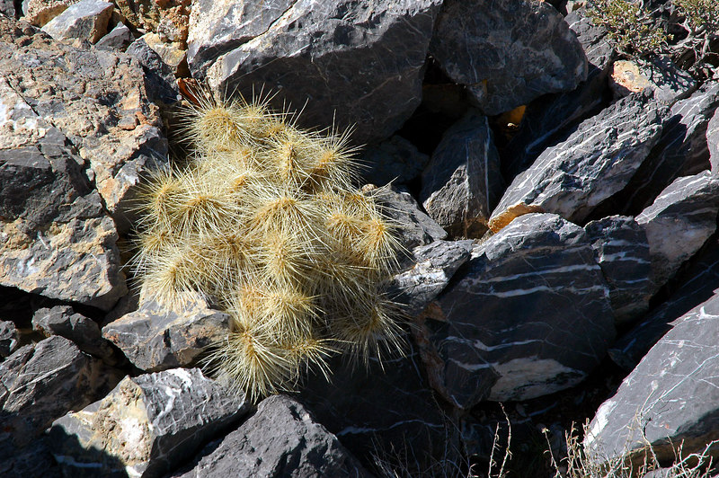 There were a lot of these hairy cactus on the hike.