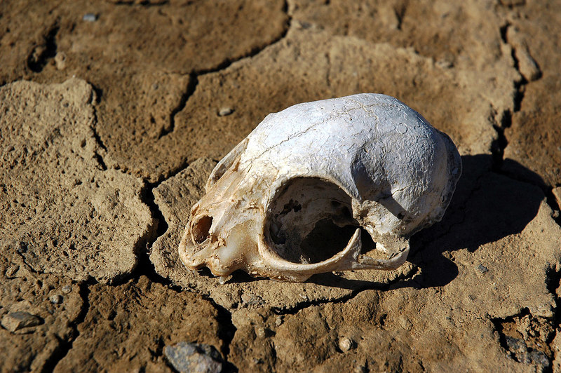 This skull was on the lakebed.