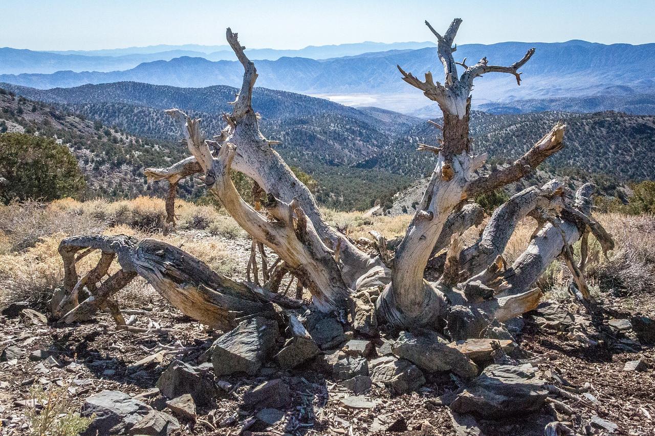 Death Valley-Friday-0331