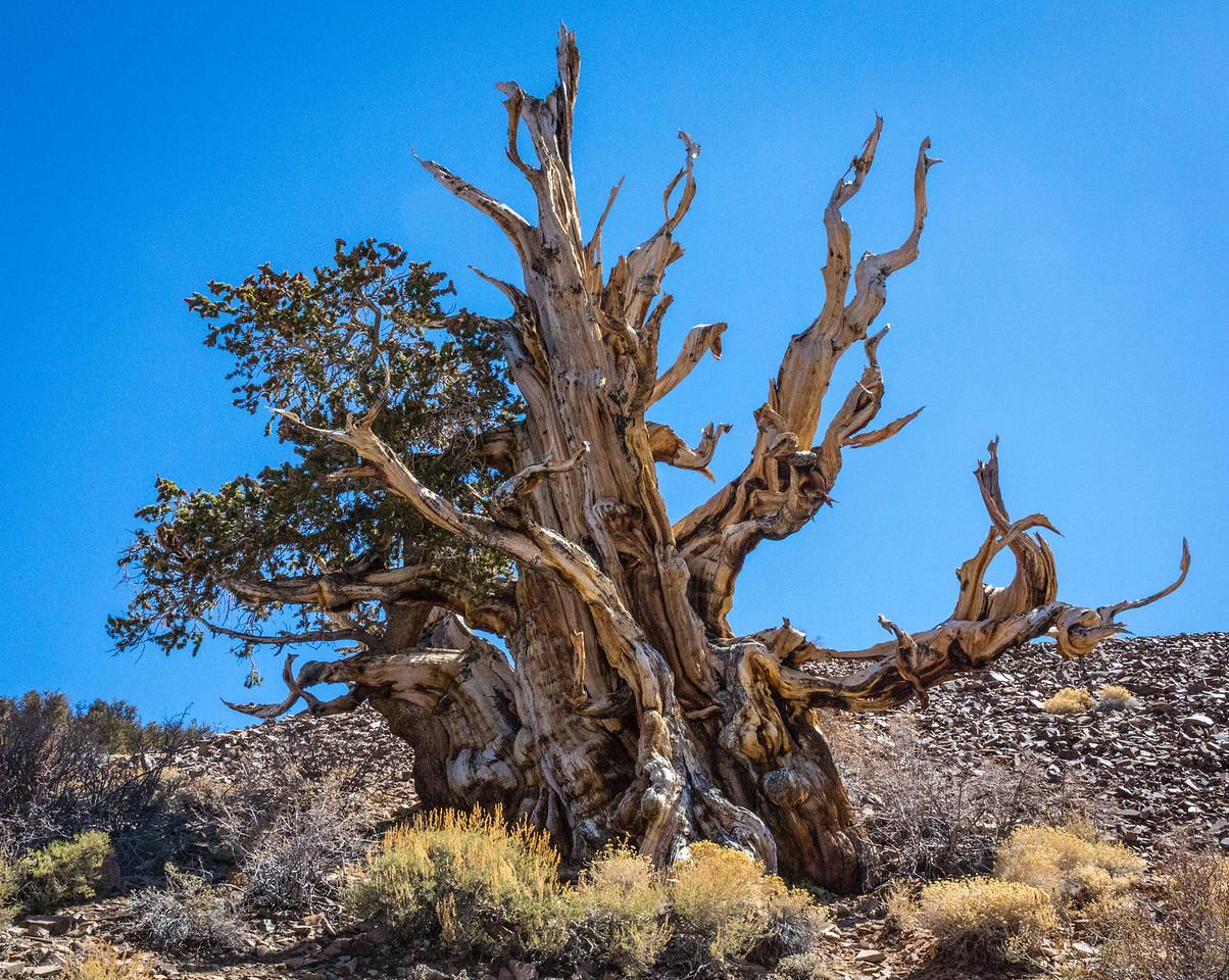 Death Valley-Friday-0537