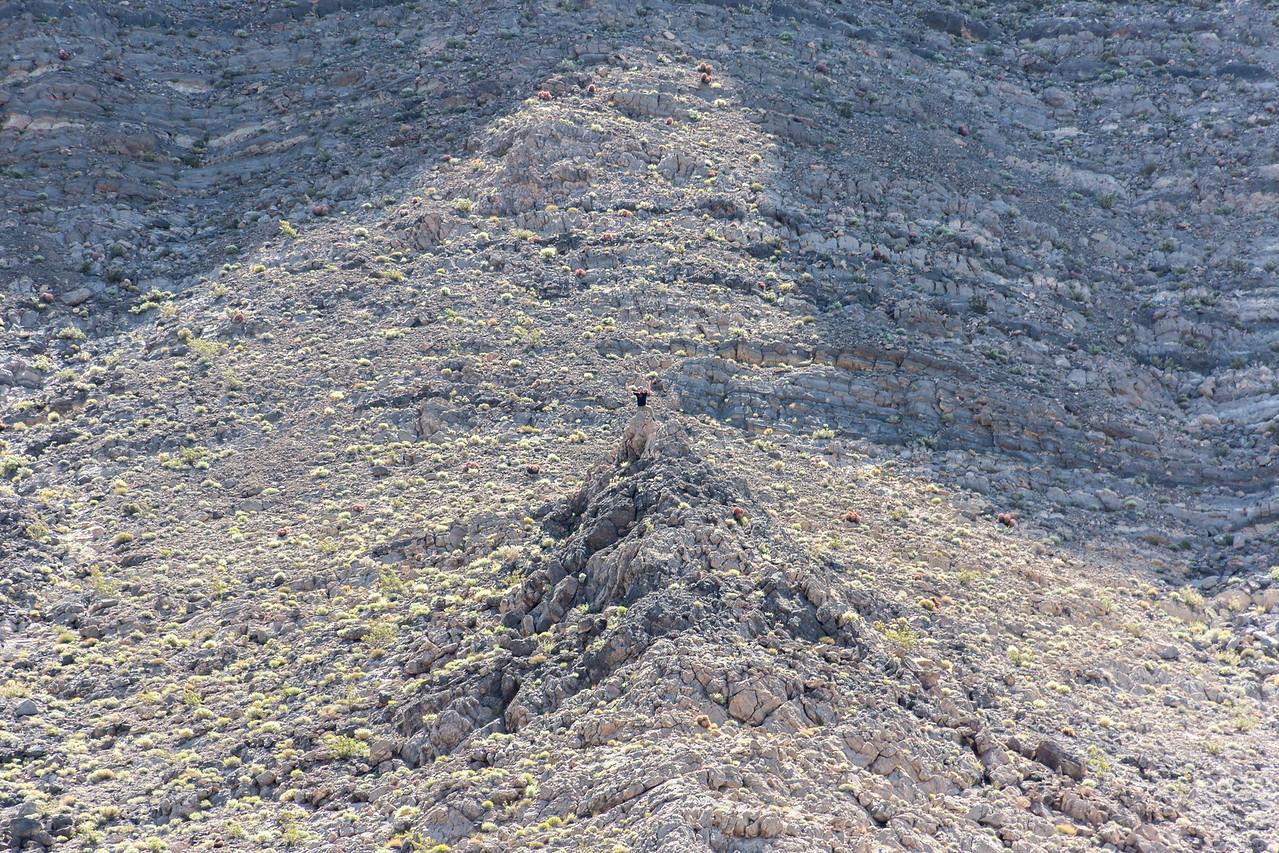Death Valley-Monday-1503