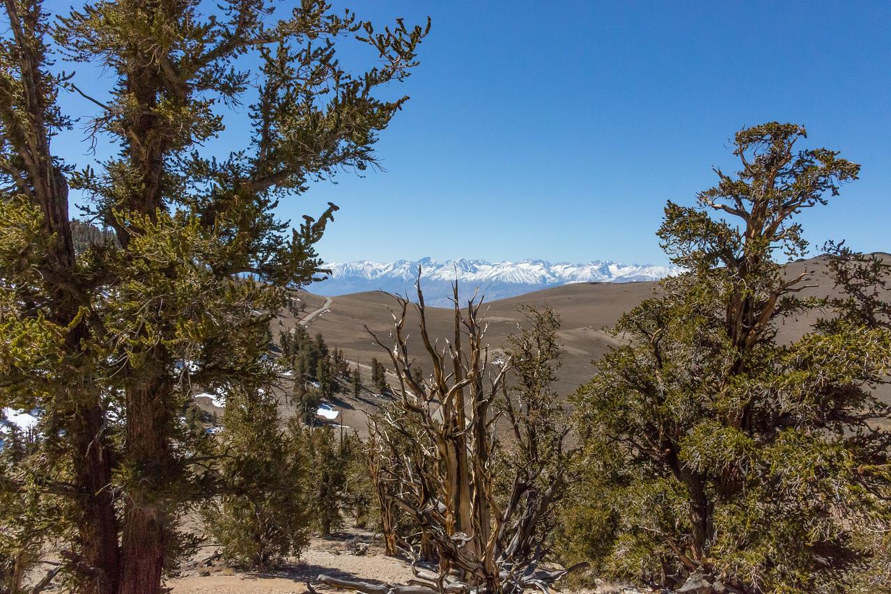 Death Valley-Friday-0465