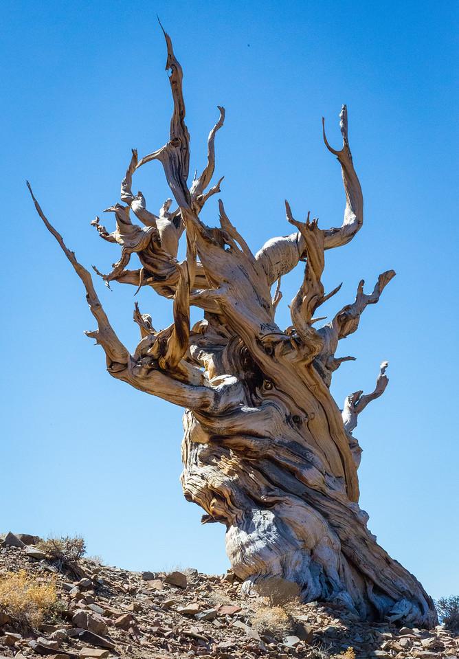 Death Valley-Friday-0531