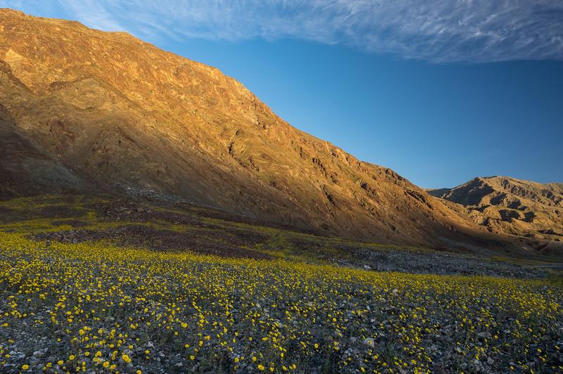 Desert Gold and the Amargosa Range