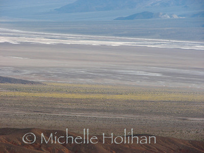 Deset Gold blooming on Death Valley floor