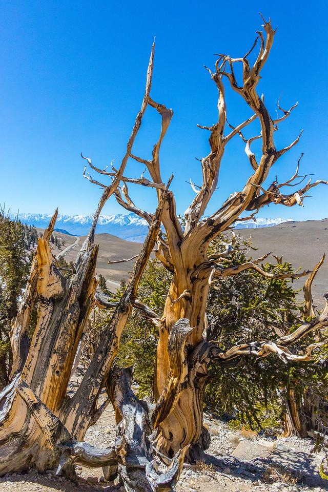 Death Valley-Friday-0475
