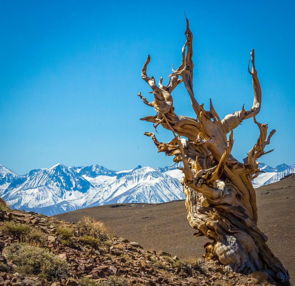 Death Valley-Friday-0524