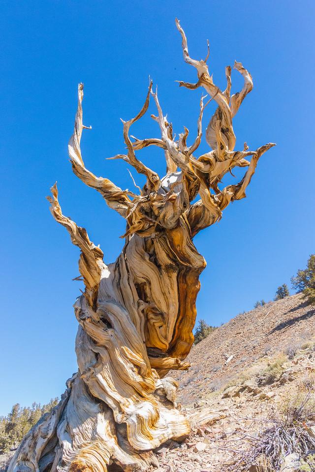 Death Valley-Friday-0533