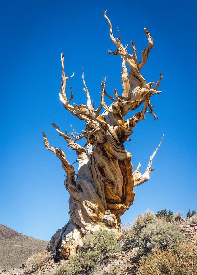 Death Valley-Friday-0538