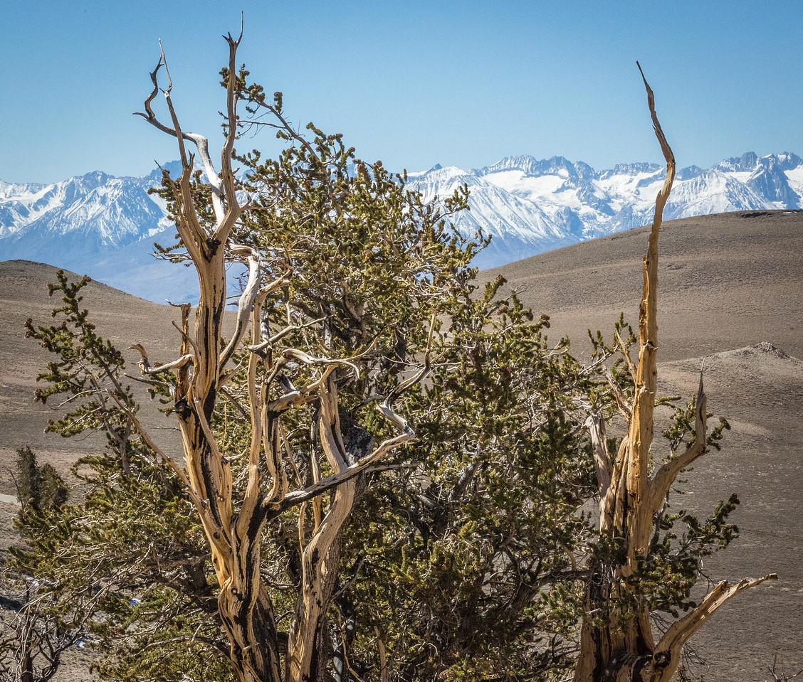 Death Valley-Friday-0453