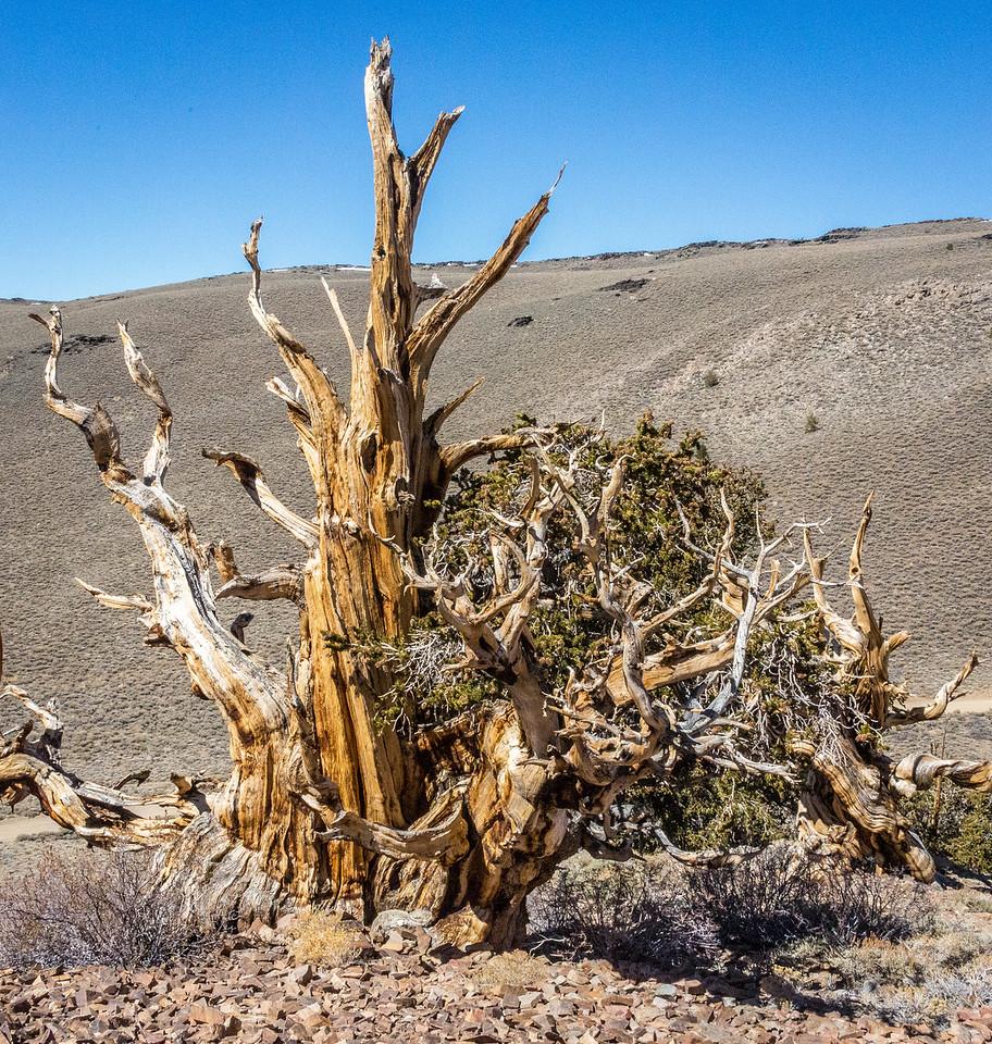 Death Valley-Friday-0517