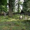 Overgrowth - Coytesville Cemetery, NJ
