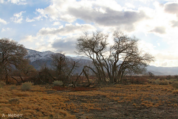 Lone Pine with Inyo Mountains as a backdrop