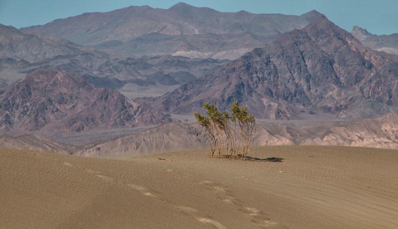 Masquite Dunes, Death Valley National Park, California
