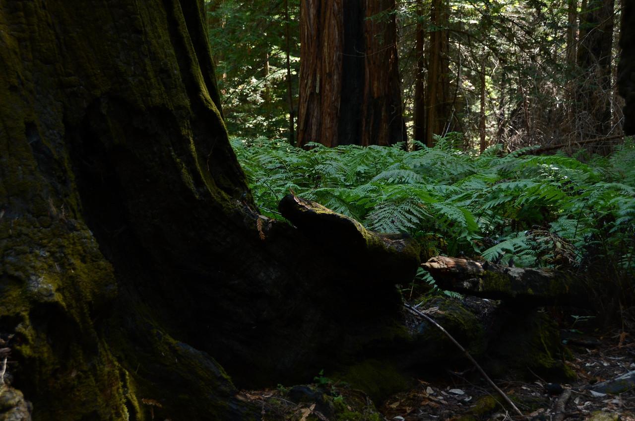 Fern groves
