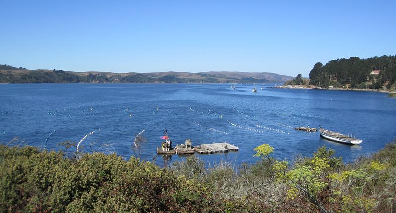 Mollusk mariculture (Tomales Bay)